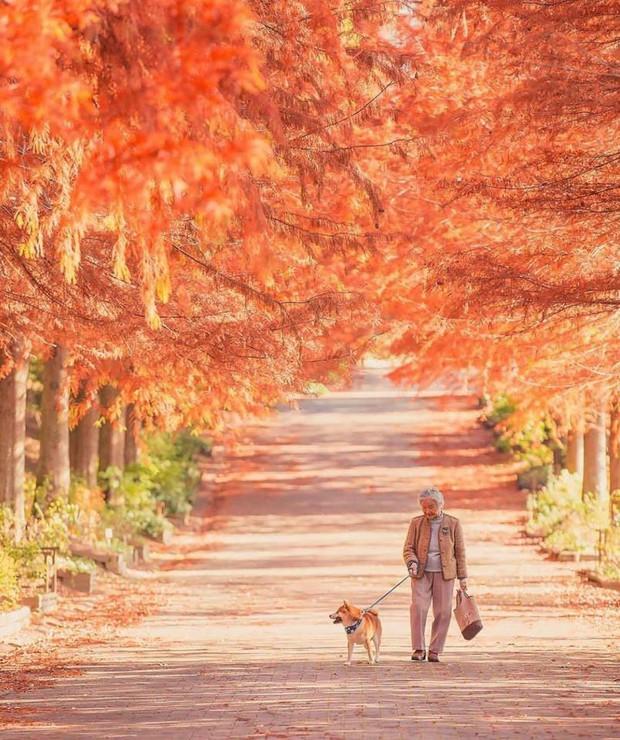 Bộ ảnh đầy cảm xúc của cụ bà Nhật Bản và chú cún con: Khi về già, chỉ cần một người đồng hành đáng yêu thế này thôi! - Ảnh 10.