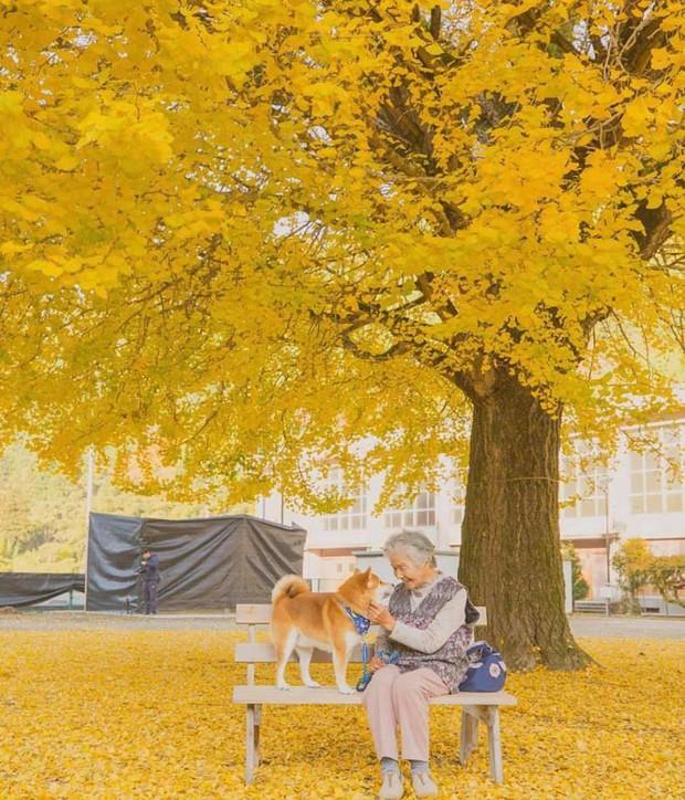 Bộ ảnh đầy cảm xúc của cụ bà Nhật Bản và chú cún con: Khi về già, chỉ cần một người đồng hành đáng yêu thế này thôi! - Ảnh 14.