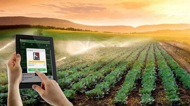 Người dân Trung Quốc đua nhau đăng ký trồng cây qua mạng Internet - Ảnh 1.