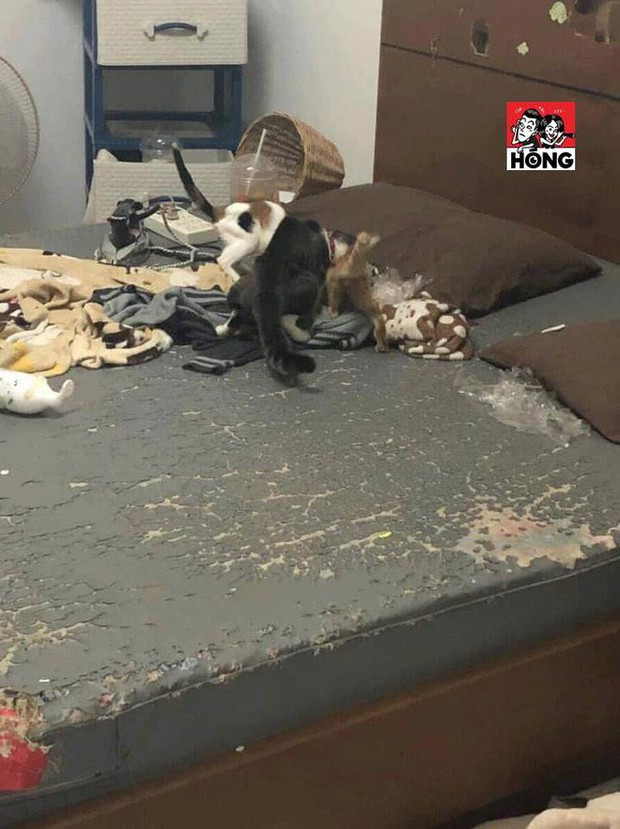 Xôn xao câu chuyện cô gái bùng tiền nhà trọ để lại căn phòng như bãi rác và 3 chú mèo ốm đói gây phẫn nộ - Ảnh 6.