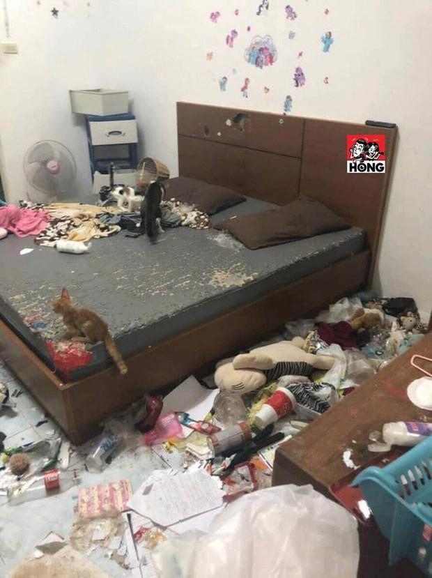 Xôn xao câu chuyện cô gái bùng tiền nhà trọ để lại căn phòng như bãi rác và 3 chú mèo ốm đói gây phẫn nộ - Ảnh 7.