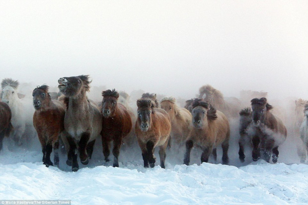 Khoa học tự tin khẳng định hồi sinh được loài ngựa thời tiền sử từ một cái xác đóng băng 42.000 năm trước - Ảnh 5.