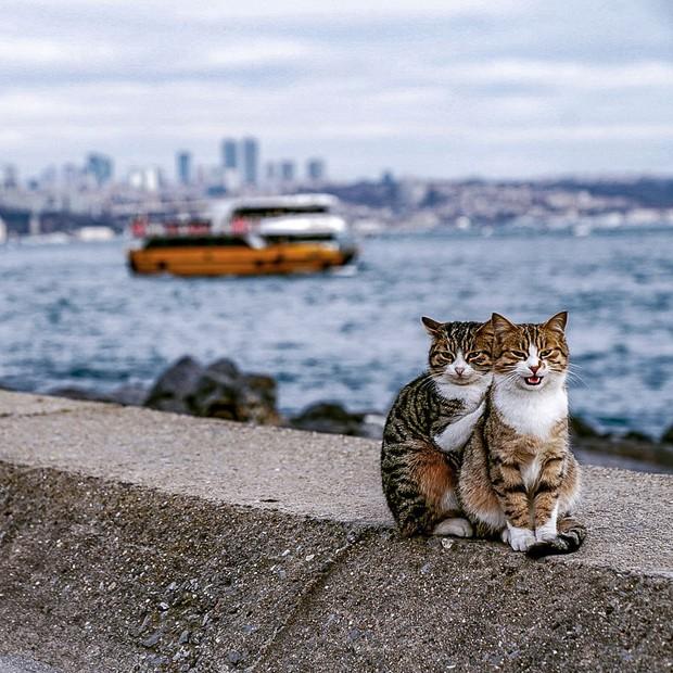 Hình ảnh đôi mèo âu yếm đầy tình cảm trên bến cảng khiến hội FA suy sụp: Đến lũ mèo cũng còn có nhau - Ảnh 1.