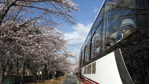 8 năm sau thảm họa hạt nhân, Fukushima hồi sinh đón người dân trở về - Ảnh 2.