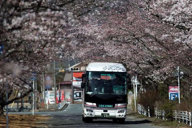 8 năm sau thảm họa hạt nhân, Fukushima hồi sinh đón người dân trở về - Ảnh 4.