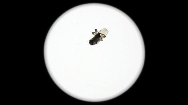 Một con ruồi chui vào ống kính camera 40 triệu, khổ chủ méo mặt mất thêm 9 triệu tiền sửa - Ảnh 1.