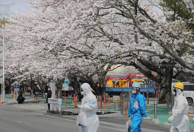 8 năm sau thảm họa hạt nhân, Fukushima hồi sinh đón người dân trở về - Ảnh 3.