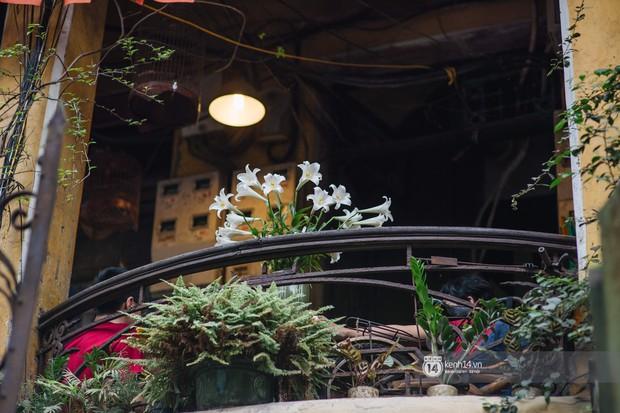 Hà Nội tháng 4: Hoa loa kèn nở e ấp trên phố, từng cánh trắng muốt và thoảng hương dịu ngọt - Ảnh 16.