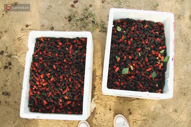 Một ngày dừng trà sữa đi, ở Hà Nội có bao nhiêu thứ nước giải khát đang lên ngôi trong mùa này - Ảnh 1.