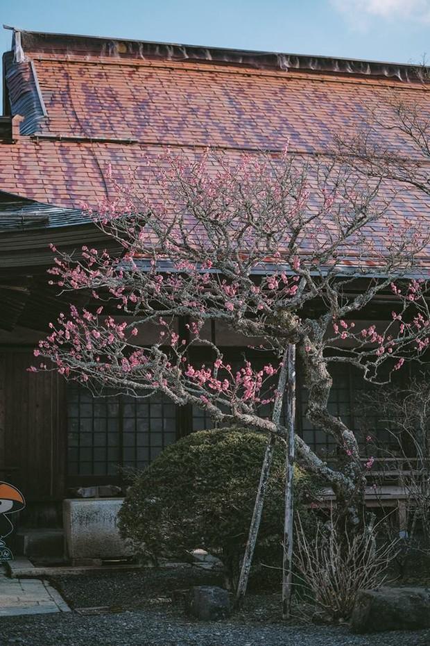 Khám phá Nghĩa trang Okunoin: Nơi được mệnh danh thánh địa thiêng liêng nhất Nhật Bản, có 5000 chiếc lồng đèn không bao giờ tắt - Ảnh 15.