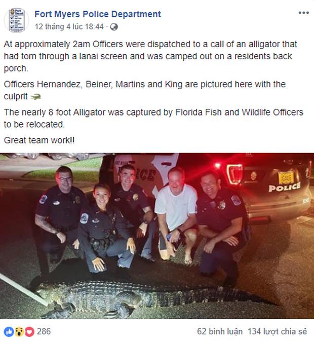 Mỹ: Cá sấu đói bụng và hứng tình đang xâm chiếm Florida - Ảnh 2.