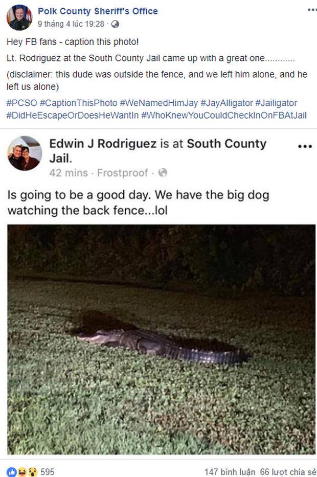 Mỹ: Cá sấu đói bụng và hứng tình đang xâm chiếm Florida - Ảnh 4.