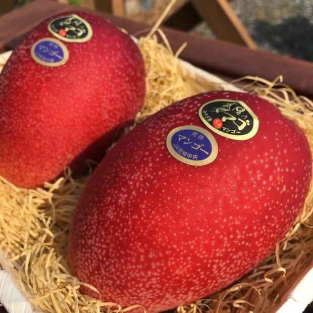 Nhật Bản có những loại trái cây thoạt nhìn thì cũng thường nhưng có giá cao bất ngờ - Ảnh 1.