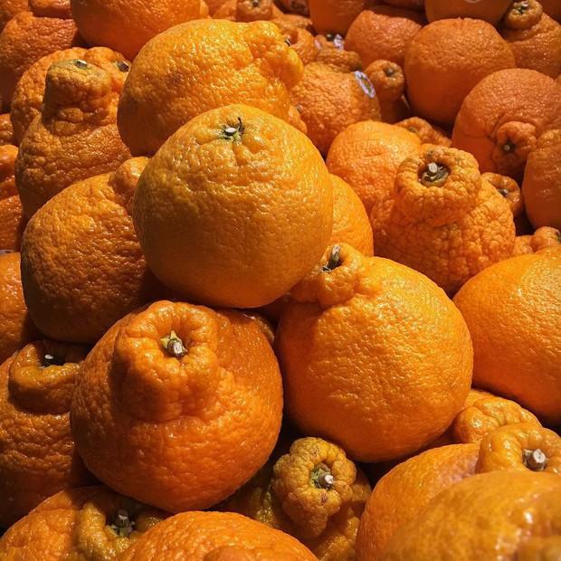 Nhật Bản có những loại trái cây thoạt nhìn thì cũng thường nhưng có giá cao bất ngờ - Ảnh 4.