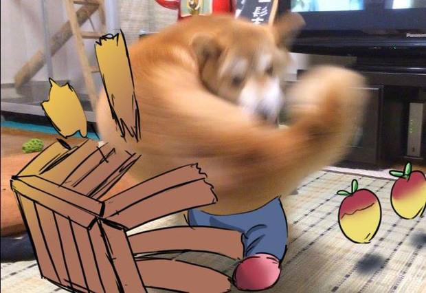 Khoảnh khắc chú chó Shiba quay đầu tung nắm đấm không trượt phát nào như Saitama bất ngờ gây sốt trên MXH - Ảnh 6.