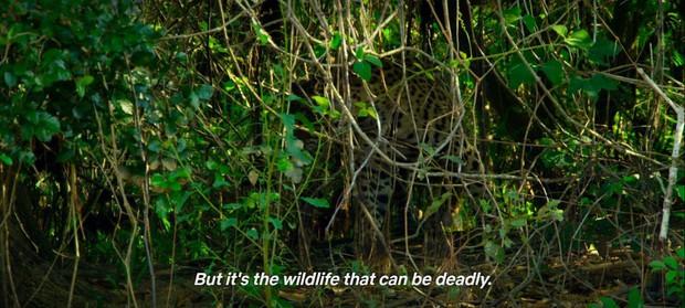 Ngoài bắt cá sấu bằng tay không, phim tương tác You vs Wild của Netflix còn gì hay ho để hút khán giả? - Ảnh 3.