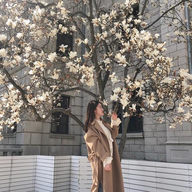 Không phải hoa anh đào, mộc lan mới chính là loài hoa đang vào độ bung nở đẹp nhất tại Seoul - Ảnh 2.