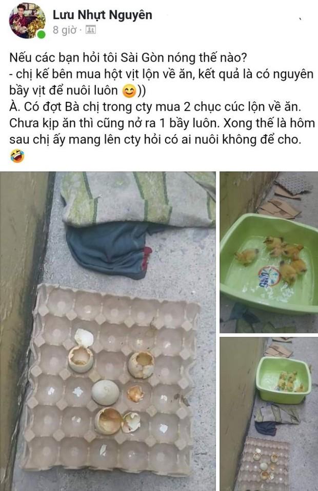 Nối tiếp tấn bi kịch của nắng nóng Sài Gòn: Đến trứng cũng không thể nằm yên.... - Ảnh 1.