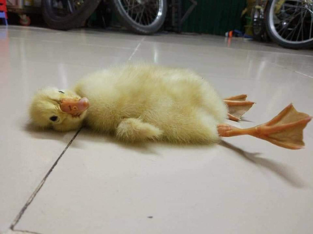 Nối tiếp tấn bi kịch của nắng nóng Sài Gòn: Đến trứng cũng không thể nằm yên.... - Ảnh 5.