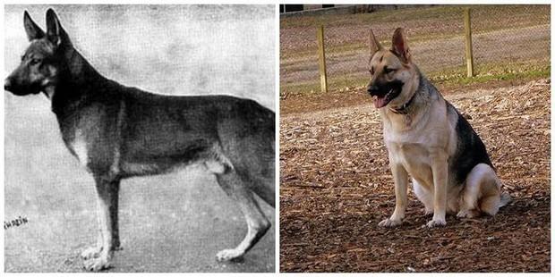 4000 năm trước một con chó trông như thế nào? Câu hỏi không tưởng này cuối cùng đã có đáp án rồi - Ảnh 1.