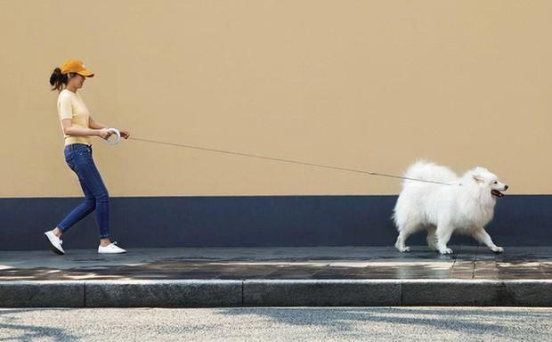Xiaomi ra mắt dây dắt chó thông minh, tích hợp đèn pin, giá khoảng 1 triệu - Ảnh 2.
