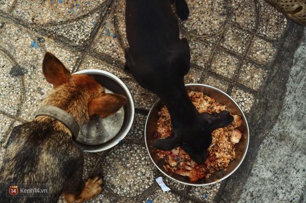 Tấm bảng Chó là bạn, không phải thức ăn của người đàn ông 20 năm bầu bạn với những chú chó ngoài đường phố Sài Gòn - Ảnh 7.