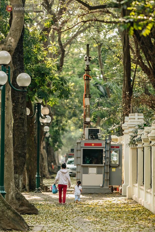 Mùa lá sấu tung bay, người dân kéo tới chụp ảnh ở con đường lãng mạn nhất Thủ đô dù nắng nóng 40 độ C - Ảnh 6.