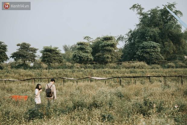 Chẳng cần lên tận Hà Giang vì Hà Nội cũng đang có cánh đồng tam giác mạch ngút ngàn, nhìn thôi cũng đủ mát cả lòng - Ảnh 3.