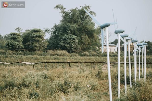Chẳng cần lên tận Hà Giang vì Hà Nội cũng đang có cánh đồng tam giác mạch ngút ngàn, nhìn thôi cũng đủ mát cả lòng - Ảnh 5.