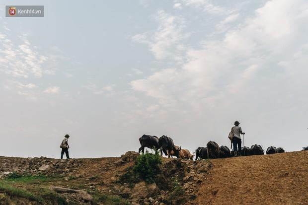 Cận cảnh đàn trâu 200 con giữa lòng Thủ đô có giá trị lên đến 6 tỷ đồng - Ảnh 19.