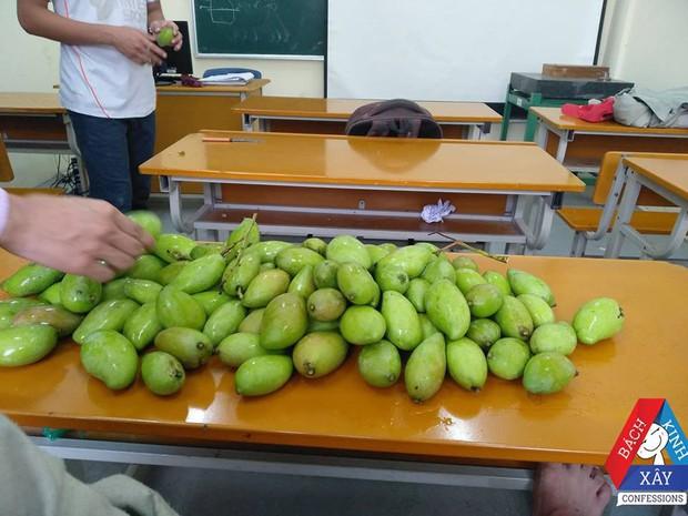 Đỉnh cao xoài tặc là đây: Sinh viên Bách Khoa chứa nguyên cả một hộc bàn đầy xoài! - Ảnh 1.