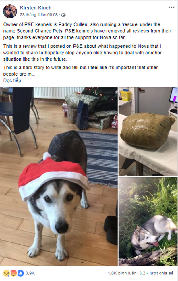 Cô gái đi du lịch về thấy chó cưng đã chết, thậm chí còn bị nhân viên chăm sóc quấn băng dính chặt cứng một cục - Ảnh 3.