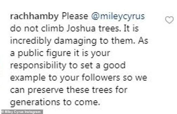 Bức ảnh tưởng không có gì mà gây phẫn nộ của Miley Cyrus: Chính chủ nhận gạch vì trèo lên cây quý để sống ảo - Ảnh 4.