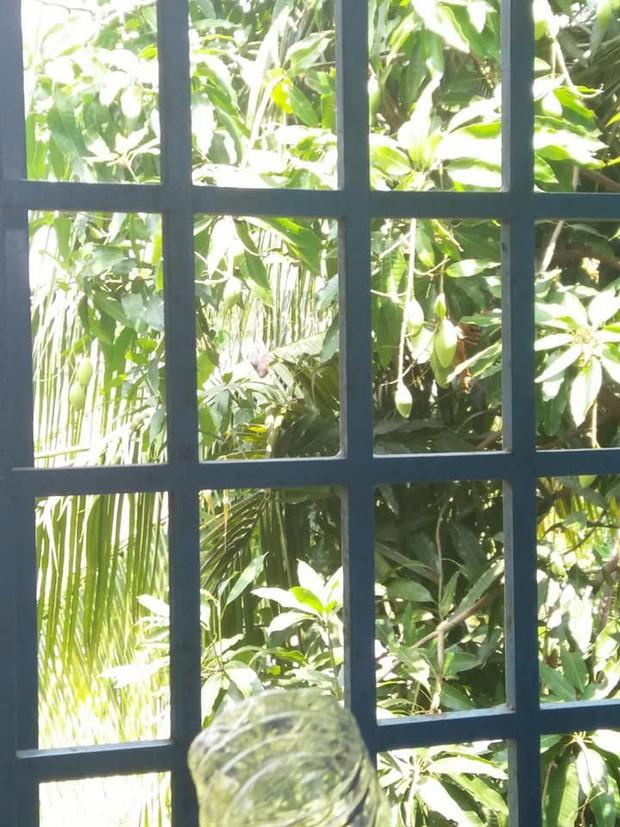 Phì cười trước loạt ảnh trèo cửa sổ trộm xoài của hội học sinh: Ai cũng có một thời thanh xuân tinh nghịch như vậy - Ảnh 3.