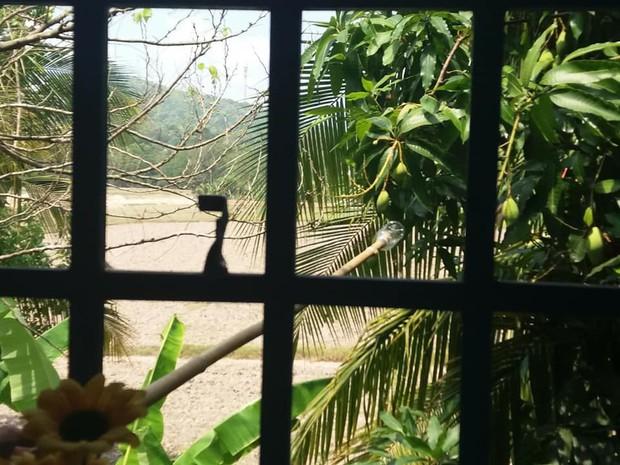 Phì cười trước loạt ảnh trèo cửa sổ trộm xoài của hội học sinh: Ai cũng có một thời thanh xuân tinh nghịch như vậy - Ảnh 4.