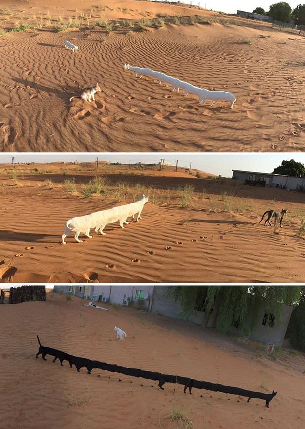 Panorama để chụp cảnh thì hay nhưng hễ chụp chó lại ra sâu róm nhiều chân - Ảnh 5.