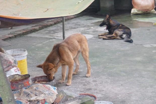 Chủ đàn chó cắn bé trai 7 tuổi tử vong: Nuôi chó để vui cửa vui nhà, sự việc xảy ra tôi cũng ân hận lắm - Ảnh 4.