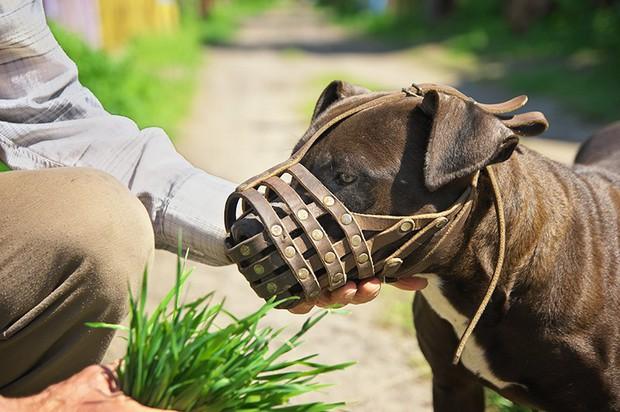 Bệnh dại do bị chó cắn có thể dẫn đến tử vong: lưu ý ngay những điều về quy trình và giá cả tiêm phòng dại - Ảnh 5.