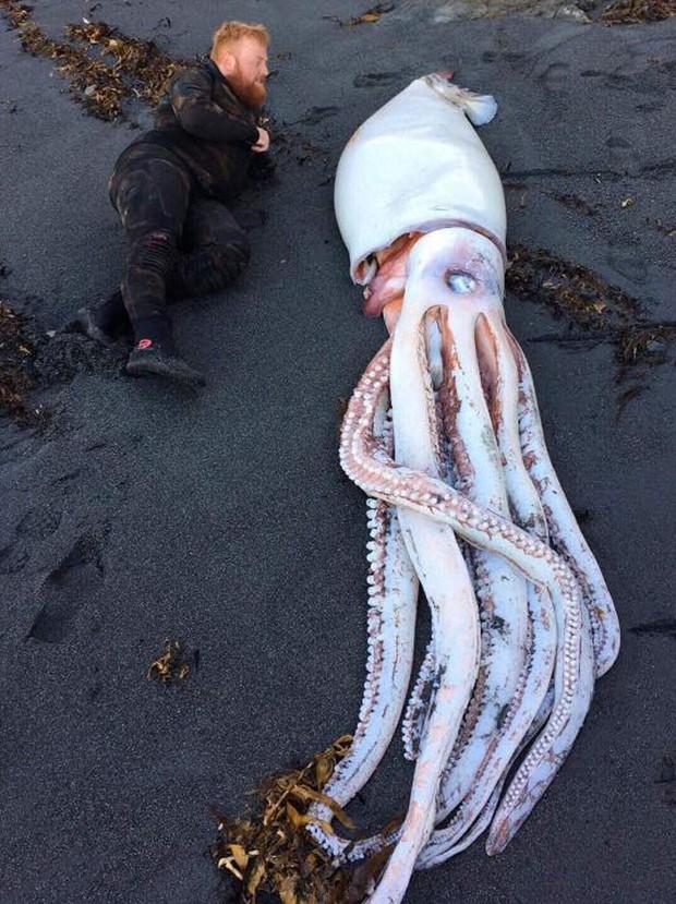 Chùm ảnh: Những tác phẩm nghệ thuật siêu thực nhất của tạo hóa và con người từng được tìm thấy ở bãi biển - Ảnh 14.