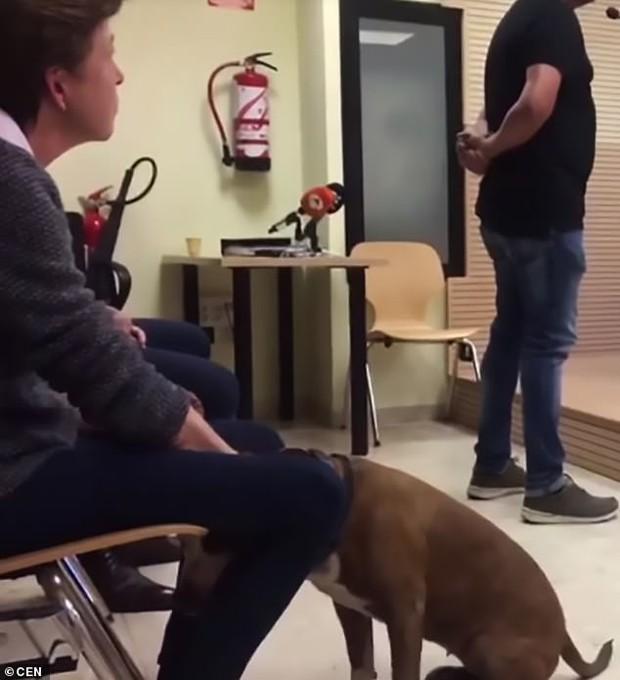Phiên tòa khó tin: Chó pitbull làm nhân chứng tố cáo chủ cũ ngược đãi mình - Ảnh 2.
