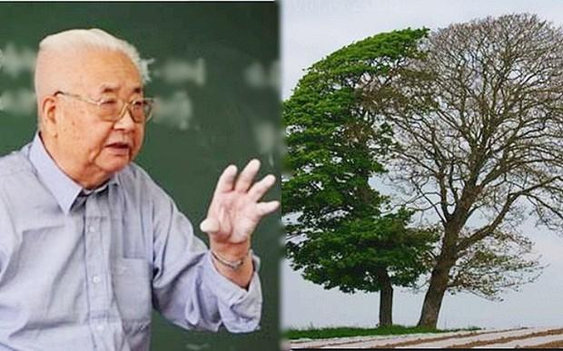 Giáo sư tài chính hỏi sinh viên: Nếu là tiều phu, các cậu sẽ chặt cây nào?, ai cũng nhao nhao trả lời chỉ duy nhất 1 sinh viên đứng lên hỏi lại, đây chính là câu hỏi cần nhất để rèn bản lĩnh khôn ngoan - Ảnh 1.