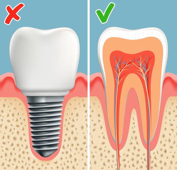Không phải trồng răng giả nữa: Khoa học đã tìm ra cách giúp bạn mọc lại răng mới chỉ sau 2 tháng - Ảnh 4.