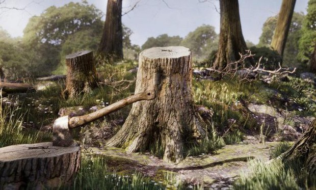 Loạt ảnh cho thấy cách con người đối xử với những cánh rừng trên thế giới tệ bạc đến mức nào - Ảnh 1.