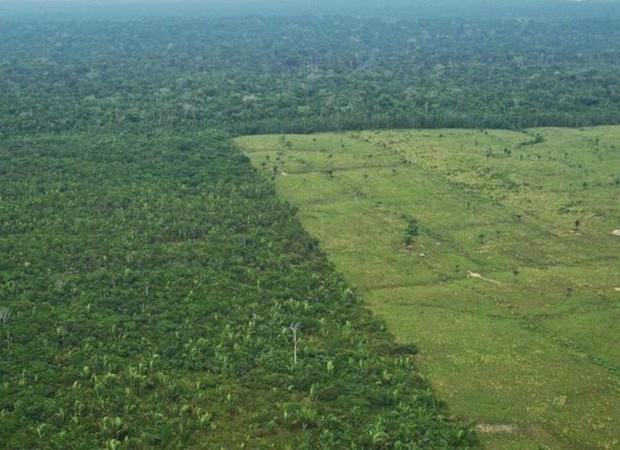 Loạt ảnh cho thấy cách con người đối xử với những cánh rừng trên thế giới tệ bạc đến mức nào - Ảnh 6.