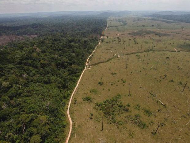 Loạt ảnh cho thấy cách con người đối xử với những cánh rừng trên thế giới tệ bạc đến mức nào - Ảnh 7.