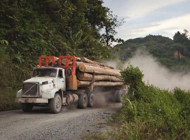 Loạt ảnh cho thấy cách con người đối xử với những cánh rừng trên thế giới tệ bạc đến mức nào - Ảnh 10.