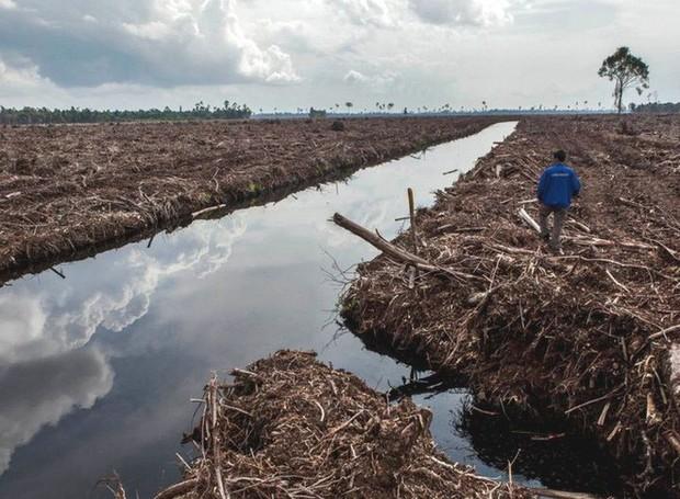 Loạt ảnh cho thấy cách con người đối xử với những cánh rừng trên thế giới tệ bạc đến mức nào - Ảnh 11.