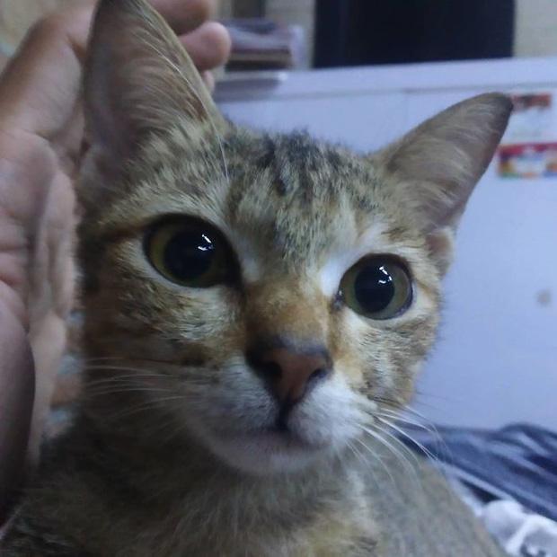 Cắn đứt tai nghe của sen, boss mèo đi bắt con rắn về đền để rồi trở thành ngôi sao MXH - Ảnh 2.