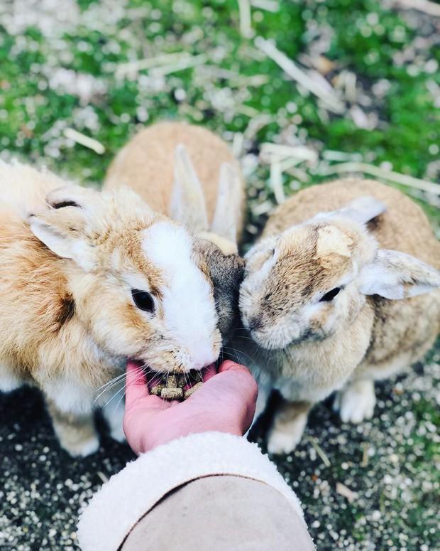 Góc đáng yêu: Hòn đảo thỏ nhiều hơn người ở Nhật Bản, nhìn thôi cũng đã muốn chết chìm vì sự cute  - Ảnh 8.