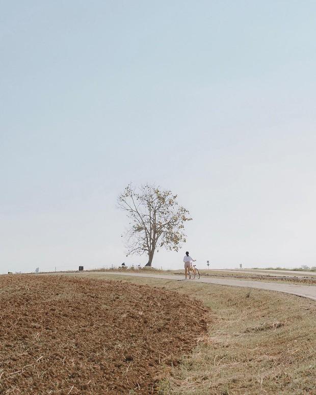 Đã tìm ra toạ độ của trang trại đẹp tựa trời Âu khiến giới trẻ thi nhau đến check-in rần rần - Ảnh 7.